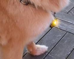 Orbiloc Dog-Light