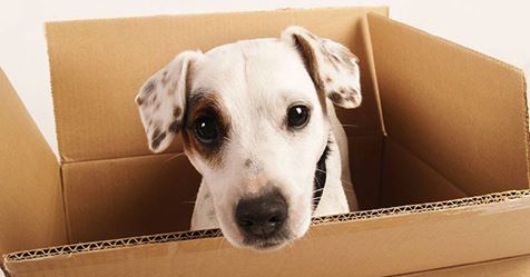Sjove Hunde tricks du kan lave med din hund