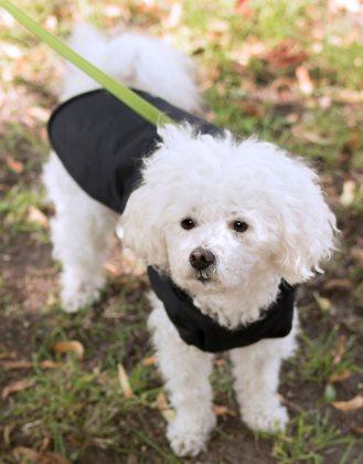 Hundedækken Jet -Vandafvisende vinterdækken m/Lunt fleecefor
