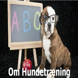 Om_Hundetraening_001 NY