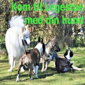 kom_tillegestue_med_din_hund NY