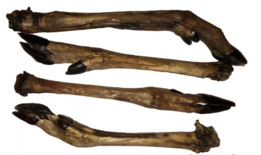 Naturlig Tørret hjorteben allergivenlige